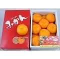 《上和水果》日本德島無籽溫室蜜柑15粒裝