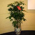 【P-005】組合盆栽:室內盆栽-桌上型盆栽-創意組合盆栽組合盆栽設計