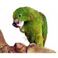 缺《寵物鳥世界》 AMG0046 Amigo 阿迷購 美國帕麗 鈣好吃墨魚骨(三塊/包)