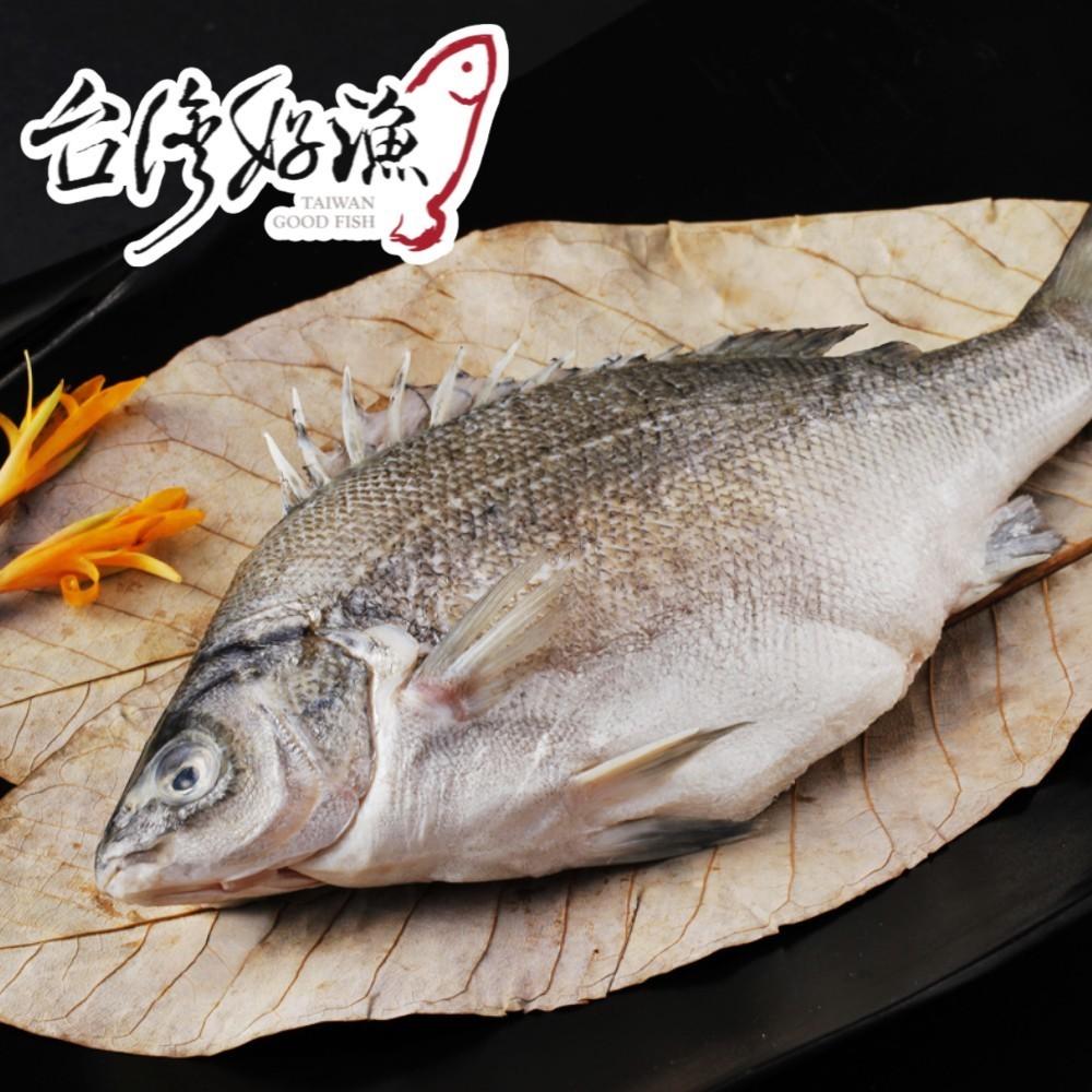 《台灣好漁》貴妃魚(澳洲國寶魚) ★號稱「淡水魚中的黑鮪魚肚」饕客必選,無毒魚-每尾足400g以上