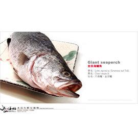 ~水汕生鮮海物~ 大規格~金目海鱸魚有豐富DHA肉身厚味鮮甘甜540g ± 8%  全魚去鰓、去肚、去鱗