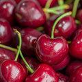 澳洲塔斯馬尼亞櫻桃 珍稀極品 超大直徑34mm 1公斤禮盒包裝◆Tasmania Cherries◆限量◆低溫配送◆2020到貨開放搶購