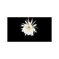 SD, HD, 2K, 4K,  影片素材:70722 P02-12s ed 曇花 Epiphyllum 白花