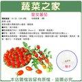 【蔬菜之家】G86.聖女蕃茄種子3顆(專業栽培聖女品種.農友種苗出產.非自採自收種子)