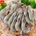 《金車生技》金車鮮蝦(中) 白蝦 500g/包
